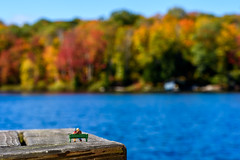 As time goes by... (John G Briggs) Tags: preiser ho scale figures little people elderly couple park bench dock trout lake ontario autumn leaves october