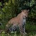 Mara Safari-7991.jpg