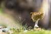 SCAPIGLIATO (Lace1952) Tags: bosco sottobosco autunno fungo scapigliato luce effetto bokeh sfocato nikond7100 nikkor18300vr