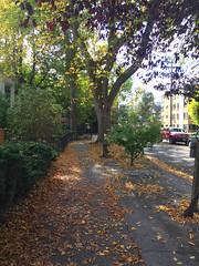 2017 YIP Day 274: Ahhhh, Autumn