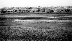 Looking upon A River (Shot by Newman) Tags: coloradoriver brush riverbank water shotbynewman mojavedesert bwphoto bwfilm southwestus ilforddelta400 35mm ilfordfilm daylight nature view shallowwater
