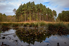 Forest mere (another_scotsman) Tags: forest tree landscape autumn fall trees lake pond reflection pool mere delamere cheshire