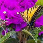 Mariposa thumbnail
