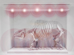 Toxodon (Steve Taylor (Photography)) Tags: toxodon naturalhistory museum skeleton ribs bones art model replica light lamp grey uk gb england greatbritain unitedkingdom london shadow pink pastel