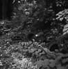 Thrown Away (doctorspider42) Tags: film 120 mediumformat mf yashica mat 124g ilford hp5 pyrocat pyrocathd 22100 epson v700 czechowicedziedzice poland