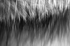 Schilf (udo w-a-n-n-i-n-g-e-r) Tags: vintage lens manual focus spring vintagelens manualfocus flora bokeh bokehlicious blumen pflanzen macro preset mth beyondbokeh manuallens manualfocusing manualexposure manualondigital udowanninger blumenwanninger macrotube macros dof smooth blur bokehgraph flowers flower garden nature ngc greatphotographers dreamy beautiful petals detail depthoffield smoothbokeh extremebokeh silkybokeh primelensprime