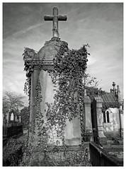 Cimetière Crêt-de-Roc  Saint Etienne. (LUDOVIC. R) Tags: miseaupoint qualitésupérieure 14m cimetière crêtderoc saint etienne 14mm 25 lumix micro 43 olympus em 10 noiretblanc