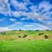 NZ Rainbow