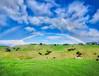 NZ Rainbow (Stuck in Customs) Tags: newzealand stuckincustomscom treyratcliff waihekeisland treyratcliffcom rainbow double green blue nz aurorahdr hdr hdrtutorial hdrphotography hdrphoto field hills clouds