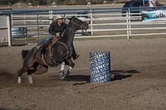 GY8A5143.jpg (BP3811) Tags: 8seconds 2017 allen arizona bareback barrel bell belt bit boots boy breakaway bronc buck buckle bull bulldogger bustin busting calf chase clown corral cow cowboys cowgirl days fall gate hat hazer header healer helmet horns horse jump kids lariat leap mutton october queen racing reins rex riders riding rodeo rope roping run saddle sheep spurs steer team teamwork tie twist wilcox wrestling