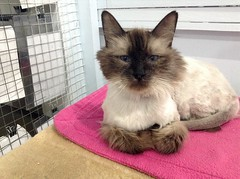 Figg - 7 year old spayed female