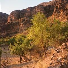 Hoces del Jalón (davidgarciadorado) Tags: jalon trees evening gorges rocks 120 6x6 film ektar kodak rolleiflex planar ngc