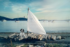 My best friend (lewie4721) Tags: digital backdrop background composite dog puppy animal boat raft wood wooden logs sail hills mountain lighthouse sand ocean beach sky water