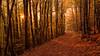 Autumn in Germany (johannesotte84) Tags: hiking herbst bunt blätter forest wood autumn otte 6d natur erholung wandern göttingen elben wald nieder sachsen germany europe indian summer