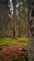 A walk in the forest (catha.li) Tags: lg lgg4 sweden forest forestimages naturewatcher woodland wood soe