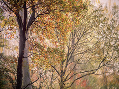* (sedregh (off for some days)) Tags: painterly trees multipleexposure intentionalcameramovement