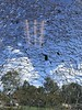 SCC Tornado Damage (S C C) Tags: tornado scc spar spartanburg spartanburgcommunitycollege