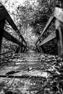 Bridge across forever - A walk in the wood -