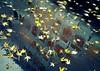 autumn rain (overthemoon) Tags: switzerland suisse schweiz svizzera romandie vaud lausanne water chauderon administrativebuilding puddle reflection leaves rain upsidedown crossprocessing utatafrontpage