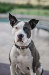 (onapaperplane) Tags: dogs dog mix breed mutt canine animal planet portrait pennsylvania