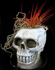 Red Haired Gentlemen (arbyreed) Tags: arbyreed macromondays halloween skull close closeup plant candlestickholder red orange