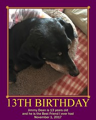 JDs 13th Birthday (Tobyotter) Tags: fdsflickrtoys motivator jimmydean dachshund birthday