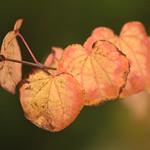 Turning Leaves thumbnail