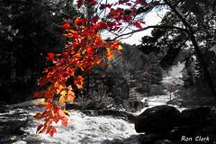 Autumn (Alcona1) Tags: fall leaves red river muskoka autumn