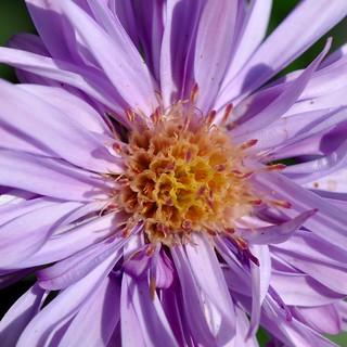timy treasures in flora
