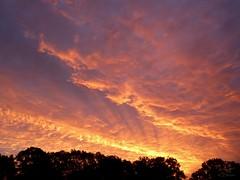 Morgenrot 21.10.2017 - 07:49h (Ellenore56) Tags: 21102017 morgenrot morgenröte sonnenaufgang gutenmorgen redsky sunrise aurora dawn sunup sonnenstrahl sonnenstrahlen strahlen sunbeam sunray rayofsunlight wolke wolken cloud clouds himmel sky heaven himmelwärts skyward heavenward goodmorning sonnenlicht sunlight wetter weather sonne sun wald bäume trees silhouette skyline dertagbeginntfeurig feurig conflagrant fervid themorningbeginsfiery detail moment augenblick sichtweise perception perspektive perspective reflektion reflection reflexion farbe color colour licht light inspiration imagination faszination magic magical stimmung mood panasonicdmctz61 ellenore56 eos laurore sparkle goddesssparkle lichtshow lightshow naturallightshowatthemorning naturalspectacle