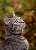 'Autumn Candy' (Jonathan Casey) Tags: cat autumn tabby garden outdoor nikon d810 200mm f2 vr