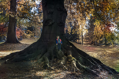 Living in my world. (rudi.verschoren) Tags: woods trees big old mother nature park autumn landscape outdoor child tree walkway path flanders brabant meise tall mood light long leaves forest belgium canon 70d eos europe europa