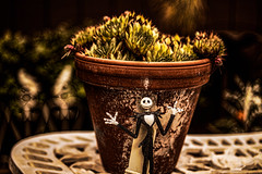 BOO I say... it's almost Halloween! (Dotsy McCurly) Tags: halloween spooky fun plant henandchicks nature yard table birds arttoy nj newjersey canoneos80d efs35mmf28macroisstm 7dwf flora adobe photoshop topaz
