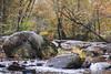 Reedy Creek (adamwilliams4405) Tags: richmond rva richmondva river nature virginia visitrichmond visitvirginia va loveva outside photography fall fallcolors canon landscapes explore tones trees