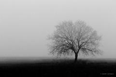 Calma esta inquietud (AvideCai) Tags: avidecai arbol bn blancoynegro niebla paisaje tamron2470