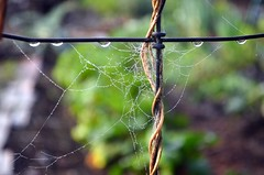 A Delicate Web (Leafing Photography) Tags: fall autumn garden october spiderwebs spiders pacificnorthwest fallgarden