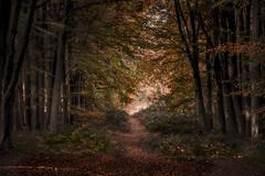 The Last Shot (unciepaul) Tags: woods trees autumn colours path leaves light dark beautiful view november uk nikond800 70200mm tripod lightroom single image bedford purleius cambridgeshire local end an era 200mm