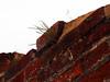 grass (mark.griffin52) Tags: olympusem5 england norfolk brancasterstaithe backtonature grass brickwall brickwork wall