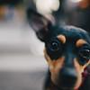 Zoé (stephaneberla) Tags: animals animaux zoé chien dog formatcarré mamifères mammal squareframe