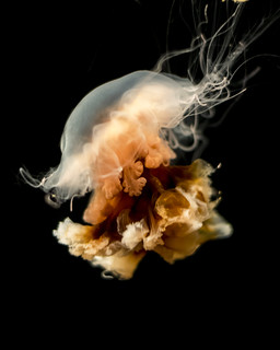 Kaboom Jelly #6