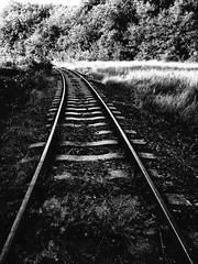 I'm on track! (max tuguese) Tags: black white blanc noir bianco nero schwarz weis monochrome digital outdoor outside rail bahnstrecke landscape nature noiretblanc