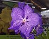 reticulated petals (BarryFackler) Tags: orchid flower botany gardening horticulture akatsukaorchidgardens bloom blossom petals leaves colorful colors indoor life bigisland hawaii akatsukaorchids horticultural plants organism biology nature flora floral ecology momsvisit2017 tropical hawaiiisland polynesia beautiful barryfackler barronfackler 2017 hawaiicounty sandwichislands botanical hawaiianislands