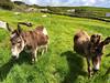Faves-2008 (PaulDoherty_US) Tags: doonbeg dingle ireland dúnchaoin corcadhuibhne