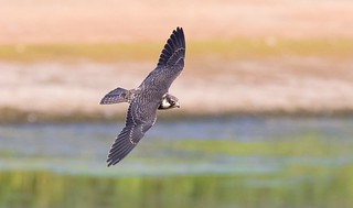 Hobby in hunting mode