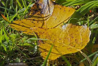 2 feuilles d automne en focus stacking