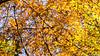 IMG_5706 (strolchi82) Tags: fellbach kappelberg herbst