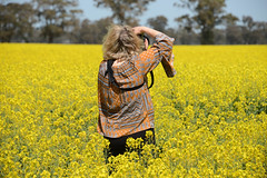 Golden Pastures (PhotosbyDi) Tags: famousflickrfive fff canola dookie agriculture crops nikond600 nikonf355628300mmlens