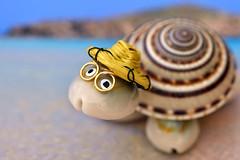 Sardinia memories (Fabio Polimadei) Tags: macromondays souvenir macro shell