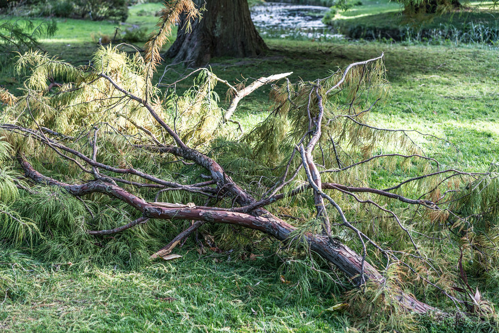 A VISIT TO THE BOTANIC GARDENS ON THE DAY AFTER AFTER STORM OPHELIA [MINIMAL STORM DAMAGE]-133297