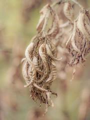 291/365 (Jane Simmonds) Tags: leaves autumn deadleaves woodland abstract nature tree 291365 3652017 pentaxtakumar50mmf14 vintagelens